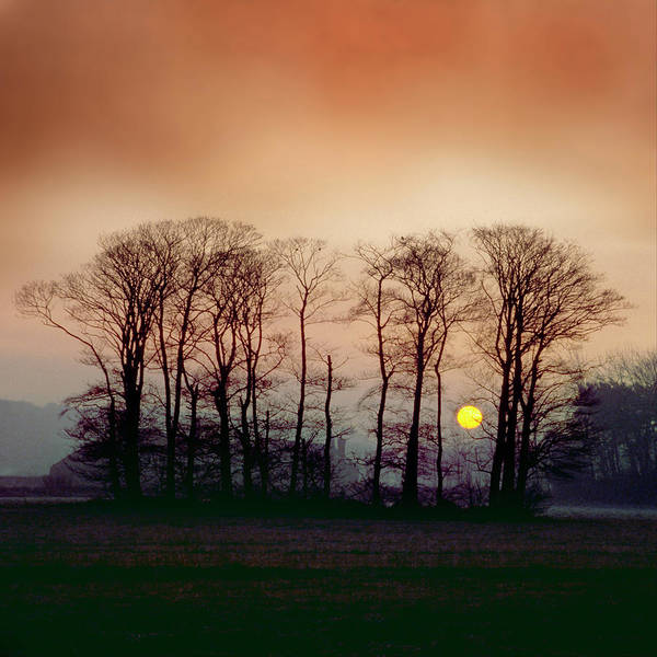 Photograph - Winter Trees by Peter OReilly