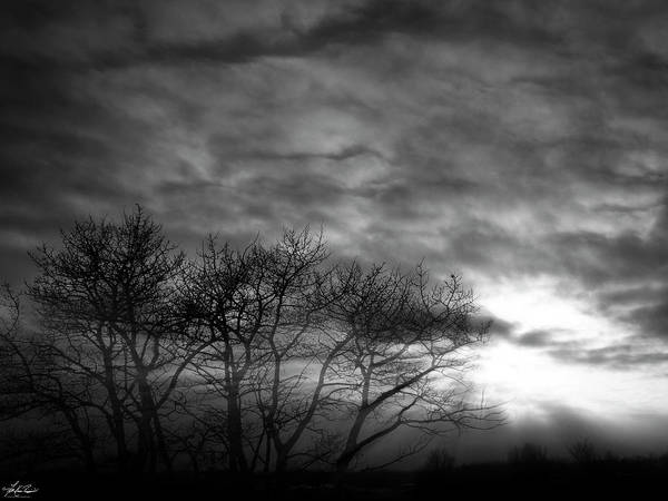 Photograph - Winter Trees by Philip Rispin