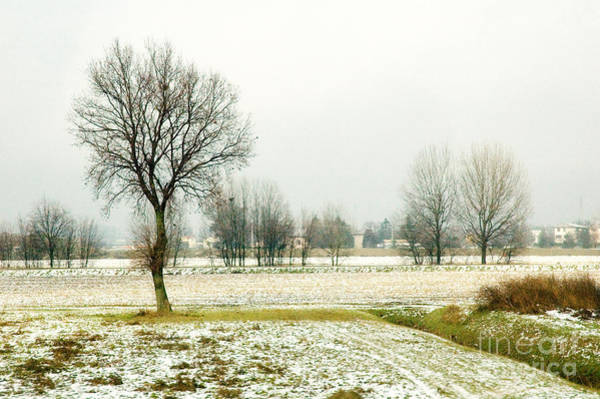 Photograph - Winter Trees by Silvia Ganora