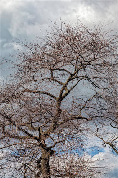 Wall Art - Photograph - Winter Trees Sky And Clouds by Robert Ullmann