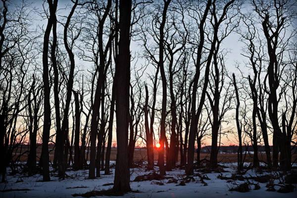 Tallgrass Wall Art - Photograph - Winter Trees by Steve Gadomski