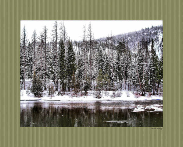 Photograph - Winter Trees by Susan Kinney
