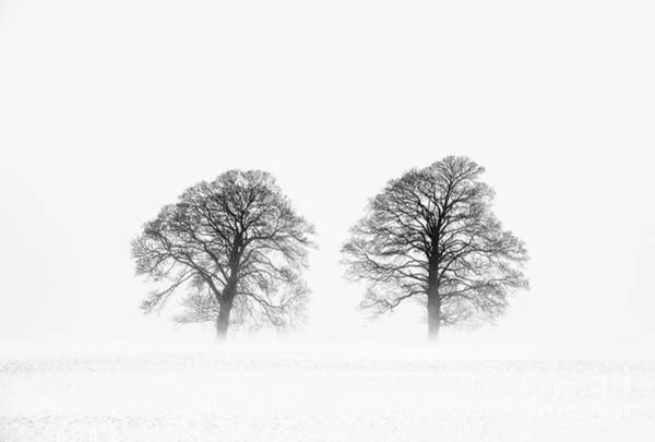 Photograph - Winter Trees by Tim Gainey