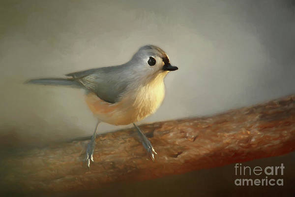 Wall Art - Photograph - Winter Tufted Titmouse by Darren Fisher