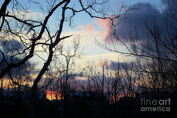 Photograph - Winter Twilight Glow by Karen Adams