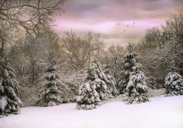 Photograph - Winter Twilight by Jessica Jenney