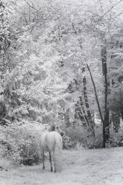 Photograph - Winter Unicorn by Wes and Dotty Weber