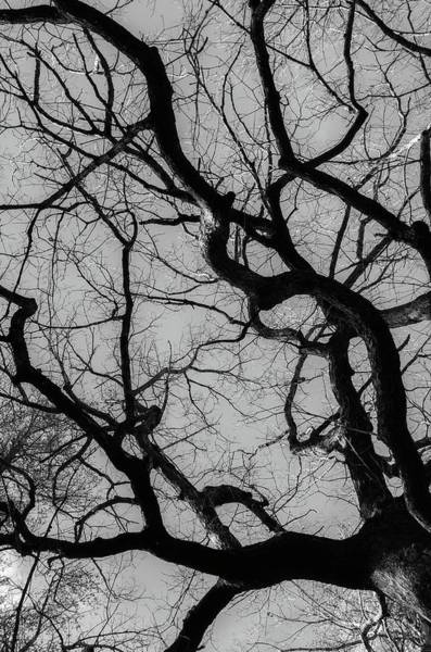 Photograph - Winter Veins by Keith Smith