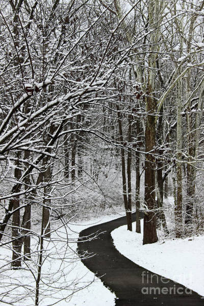 Photograph - Winter Walk by Karen Adams