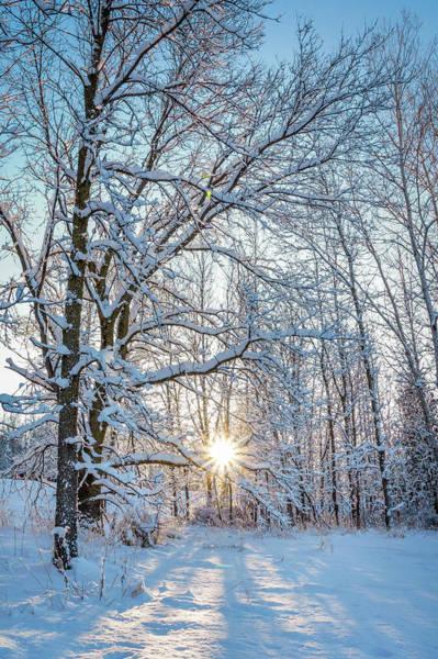 Wall Art - Photograph - Winter Warm Spot by Bill Pevlor