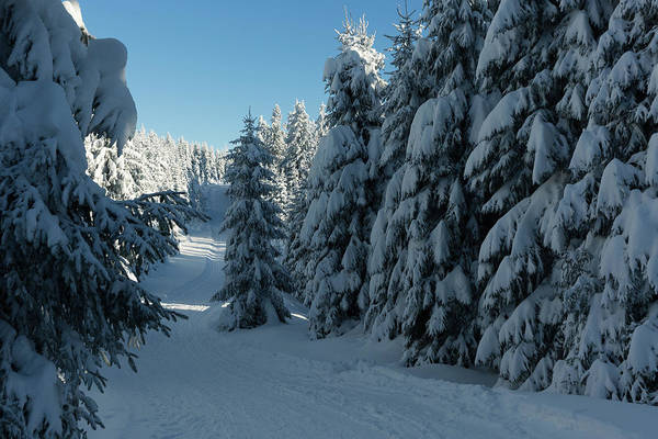 Photograph - winter way in the Harz by Andreas Levi