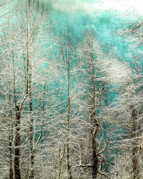 Wall Art - Photograph - Winter Whispers by Karen Wiles