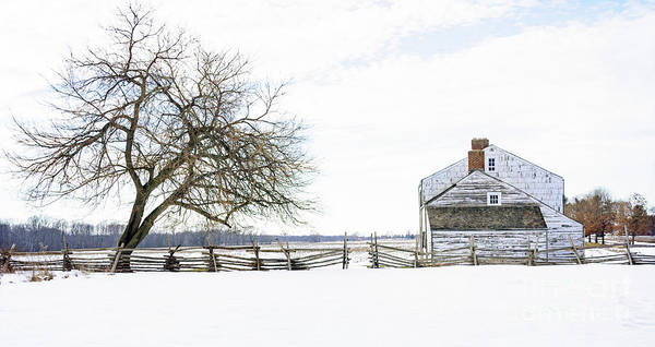 Photograph - Winter White Out by Debra Fedchin