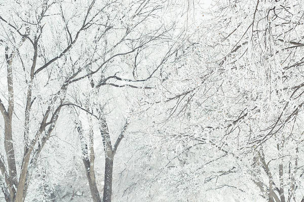 Wall Art - Photograph - Winter White Tree Branches by Debi Bishop