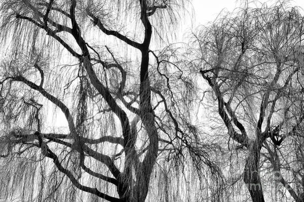 Weeping Willow Wall Art - Photograph - Winter Willows by Tim Gainey