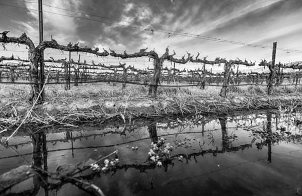 Photograph - Winter Wine by Scott Campbell