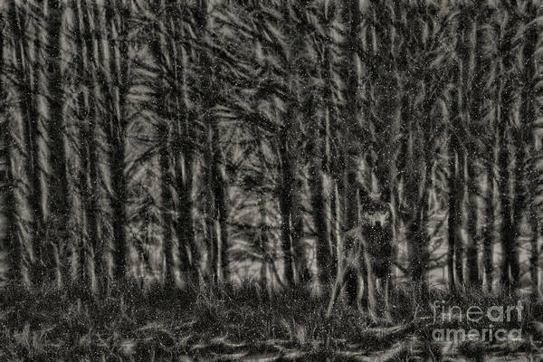 Photograph - Winter Wolf by Brad Allen Fine Art
