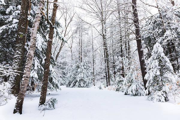Photograph - Winter Wonderland - Ahern by Robert Clifford