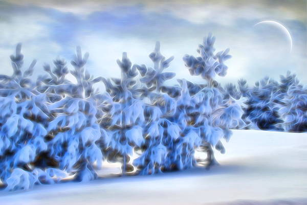 Photograph - Winter Wonderland  by Andrea Kollo