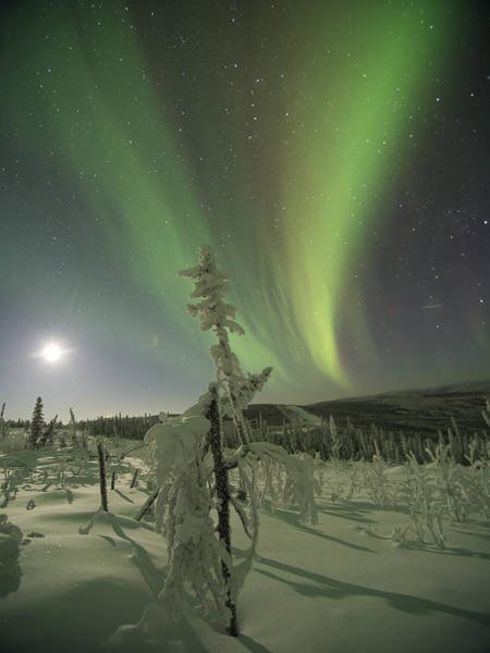 Photograph - Winter Wonderland Aurora by Ian Johnson