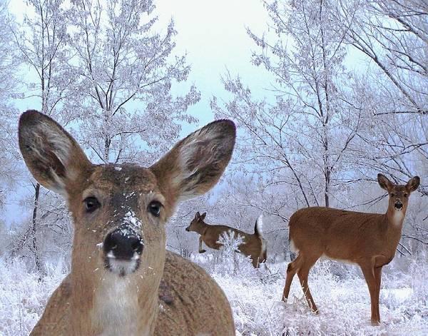 Deer Mixed Media - Winter Wonderland by Bill Stephens