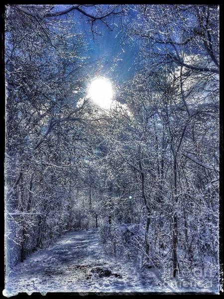 Photograph - Winter Wonderland by Christine Paris