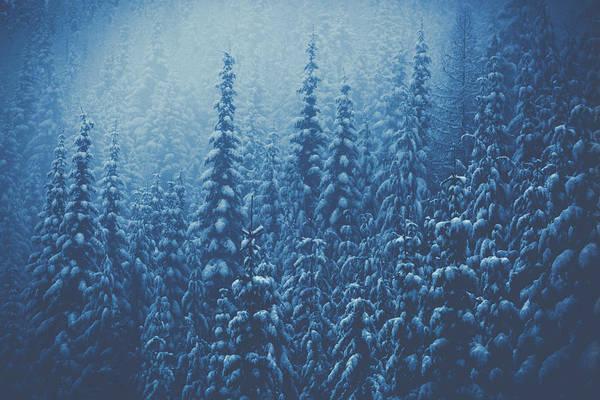 Wall Art - Photograph - Winter Wonderland by Debi Bishop