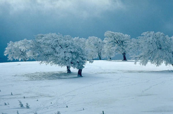 Photograph - Winter Wonderland by Flavia Westerwelle
