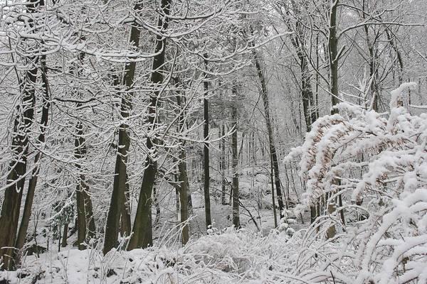 Photograph - Winter Wonderland by Polly Castor