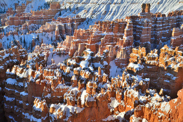 Photograph - Winter Wonderland by Ray Mathis