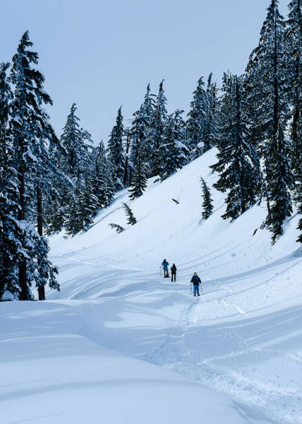 Photograph - Winter Wonderland by Tom Potter
