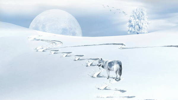 Photograph - Winter Wonderland - Wolf by Andrea Kollo