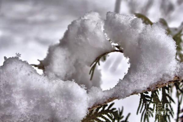 Photograph - Winter Wonderment by Victor K