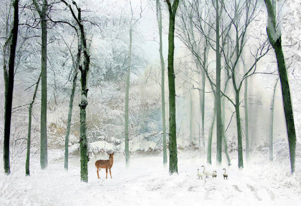 Winter Deer Photograph - Winter Woodland by Jessica Jenney