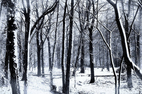 Snow Flake Photograph - Winter Woodland by Martin Newman