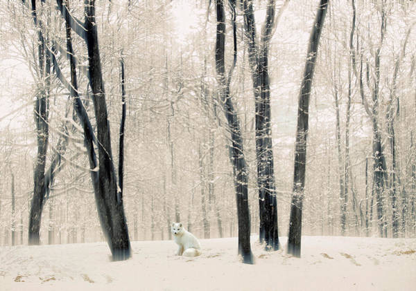 Wall Art - Photograph - Winter Woodland Visitor by Jessica Jenney