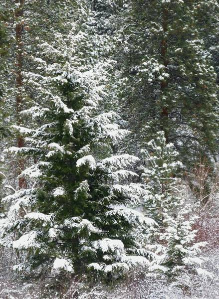 Wall Art - Photograph - Winter Woodland by Will Borden