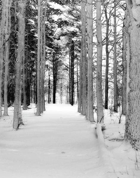 Photograph - Winter Woods by Coleman Mattingly