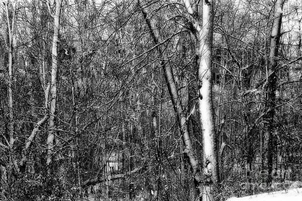 Photograph - Winter Woods by Karen Adams