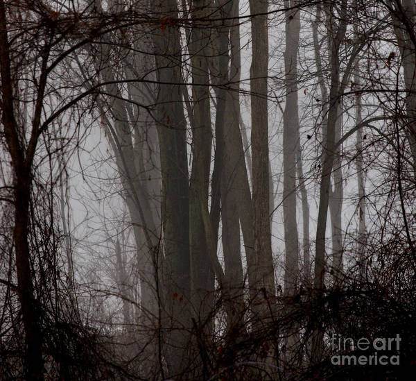 Photograph - Winter Woods by Linda Shafer