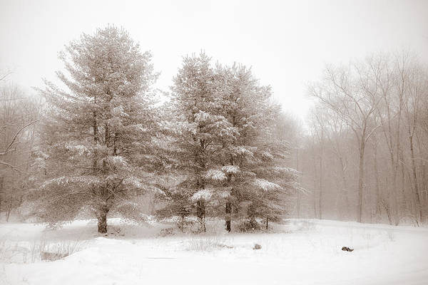 Photograph - Winter Woods by Sara Hudock