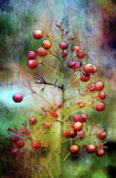 Photograph - Winters Berries 5618 Idp_2 by Steven Ward