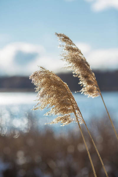 Photograph - Winter's Breeze by Sara Hudock