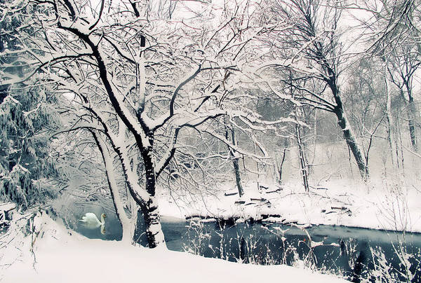 Wall Art - Photograph - Winter's Charm by Jessica Jenney