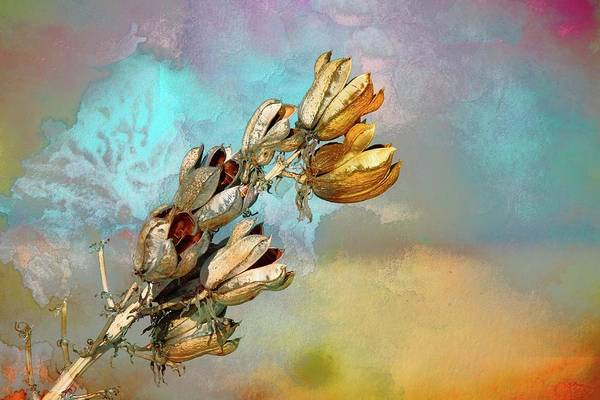 Pod Mixed Media - Winters Day Desert Yucca by Barbara Chichester