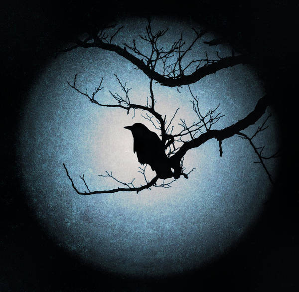 Photograph - Winter's Light Black Crow Silhouette  by Terry DeLuco