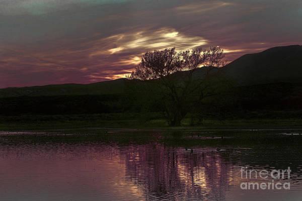 Photograph - Winter's Light by Susan Warren
