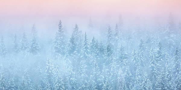Rockies Digital Art - Winter's Magic by Joy McAdams