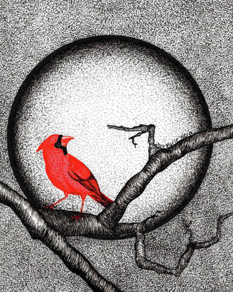 Red Cardinal Drawing - Winter's Moonlight by Marie Wern