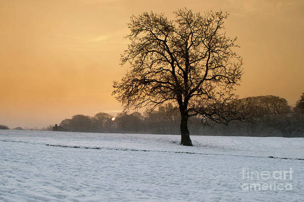 Oak Photograph - Winters Morning by Smart Aviation
